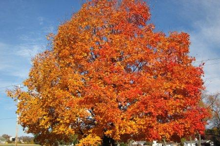 Baum mit herbstlich roten Blättern